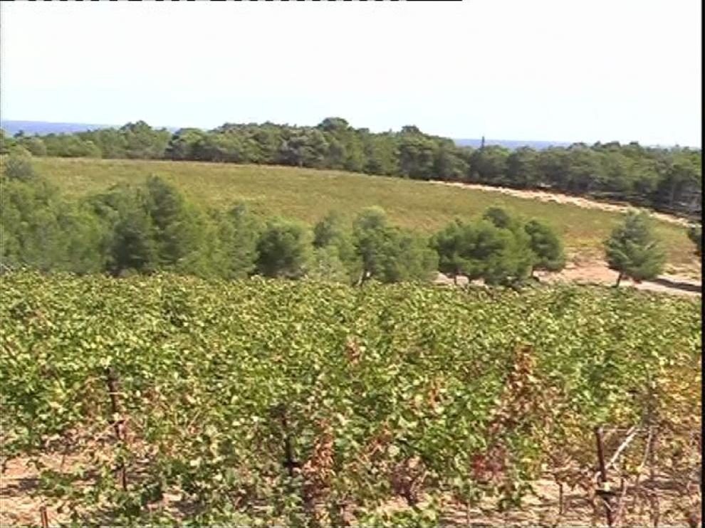 Vue d'une vigne