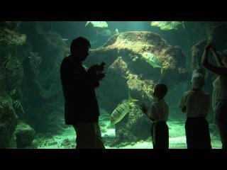Aquarium grandeur nature