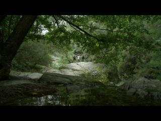 On aperçoit trois personnes qui marchent au fond d'une forêt