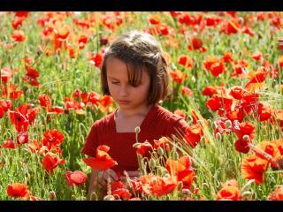 Petite fille portant une robe rouge marchant dans un champ de coquelicots