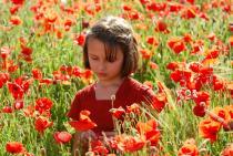 Petite fille portant une robe rouge, dans un champ de coquelicots
