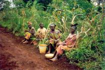 Quatre femmes camerounaises assises au bord d'un champ