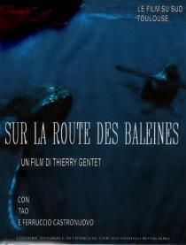Sur la route des baleines - © Les Films du Sud